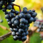 druer til eshop